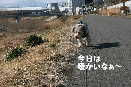IMG_8242 - コピー.JPG